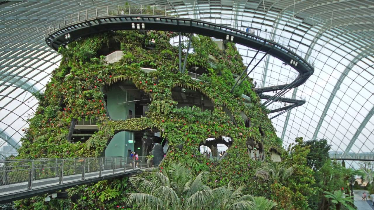 Cloud Forest